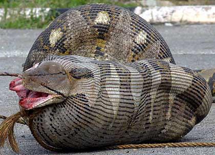 060906_python