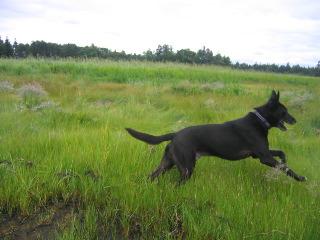J larking in field Aug 04
