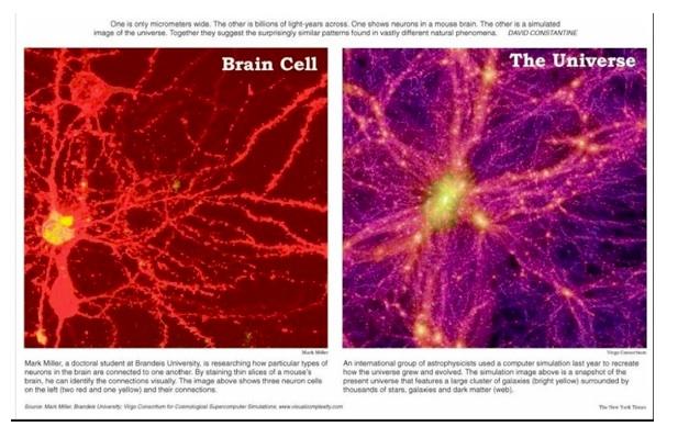 Brainuniverse