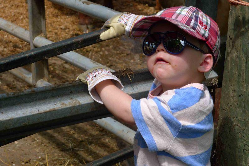 Alfie on the farm