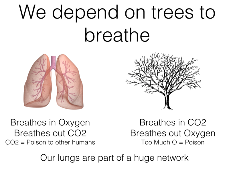 Lungs trees