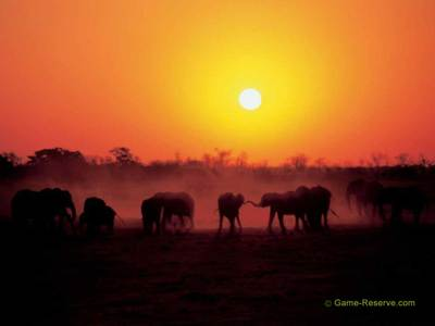 Elephants_sunset_1024x768