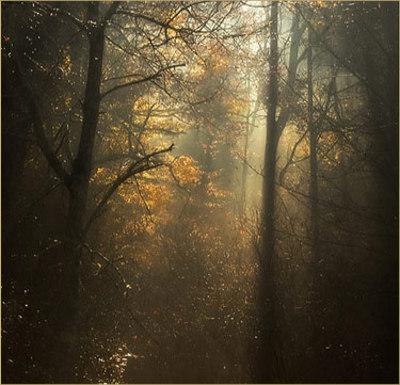 Forestshadows2