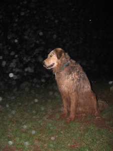 Raindog0002-1